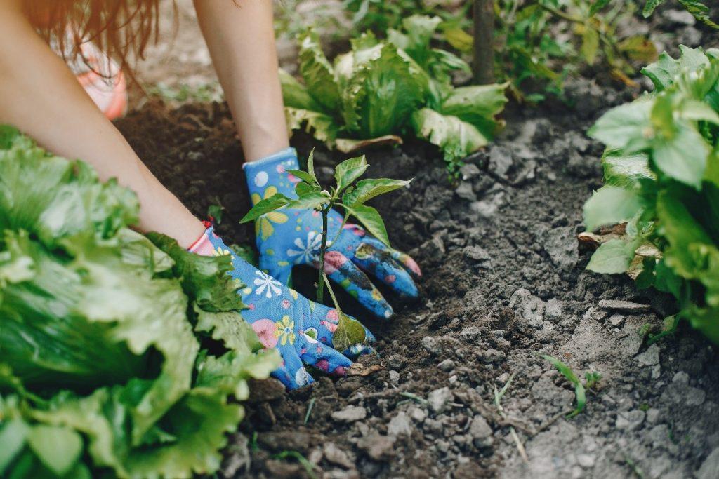 Agricultura orgânica: equilíbrio ambiental, econômico e social com sustentabilidade