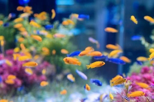 peixes em aquário