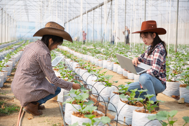 auditoria produtos orgânicos em plantações
