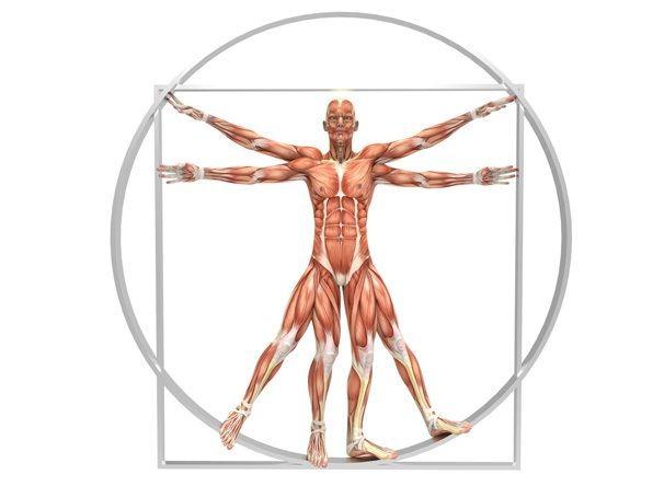 corpo humano e o medicamento homeopático