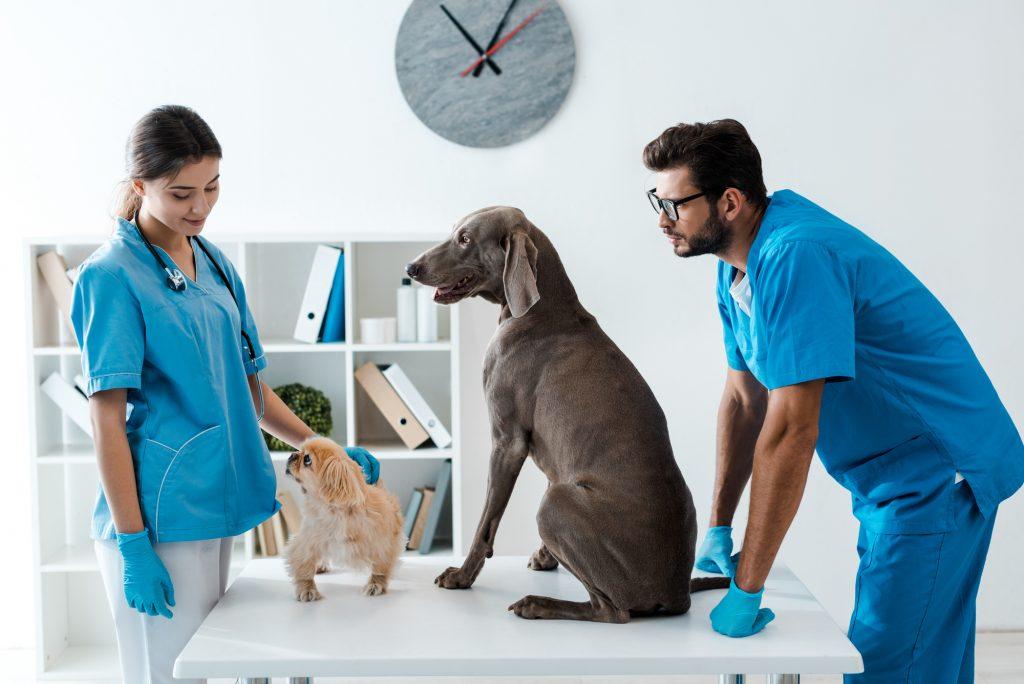 homeopatia-funciona-em-animais