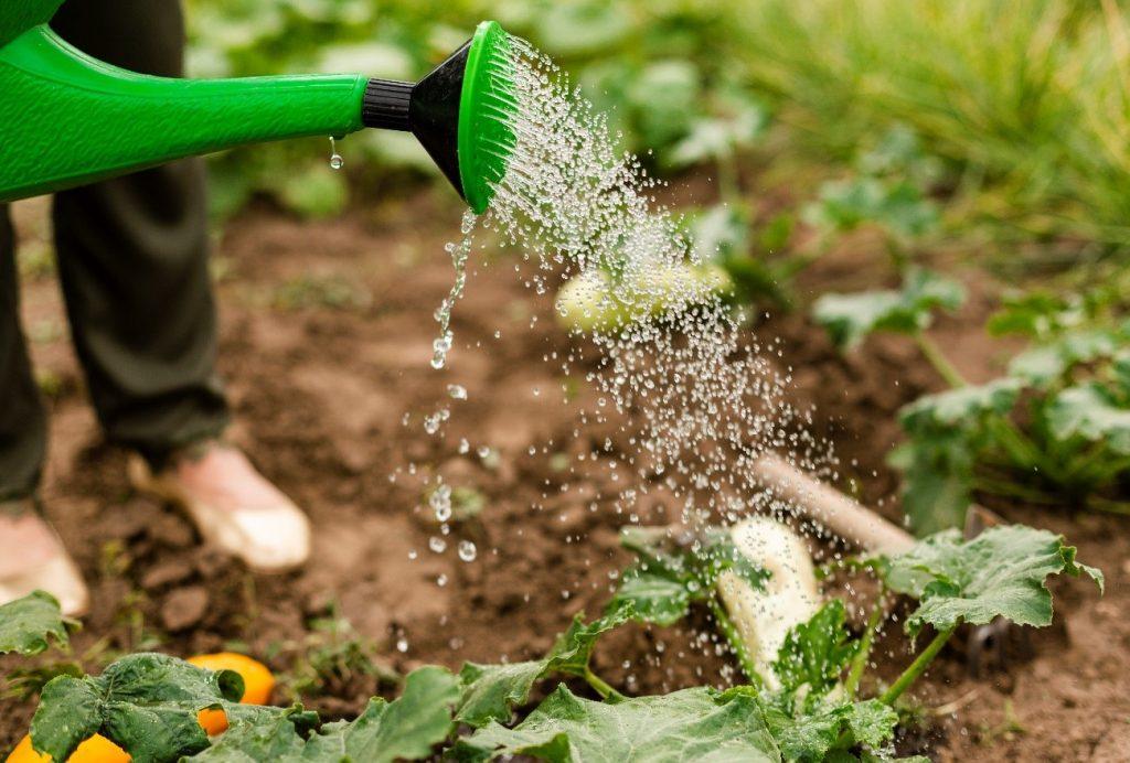 regador molhando plantas horta