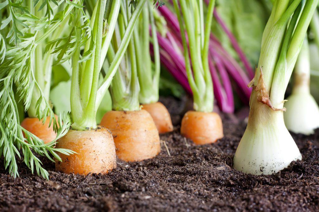 O que é adubo orgânico para horta Preço, como fazer e mais