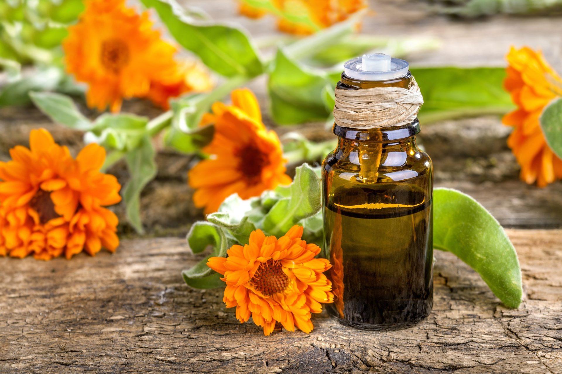 Como tratar da pele com calêndula